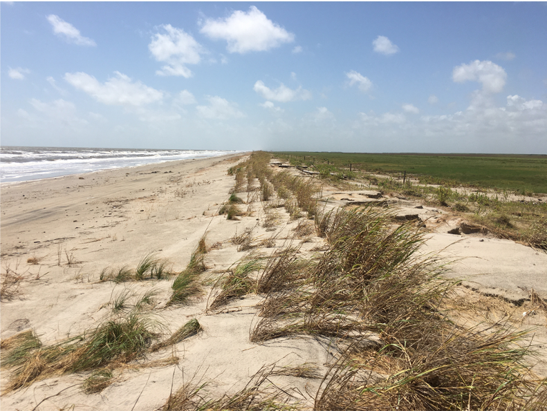 A picture of windswept sand dunes at McFaddin beach. Overwash is visible but plants growing in the dunes are largely intact.